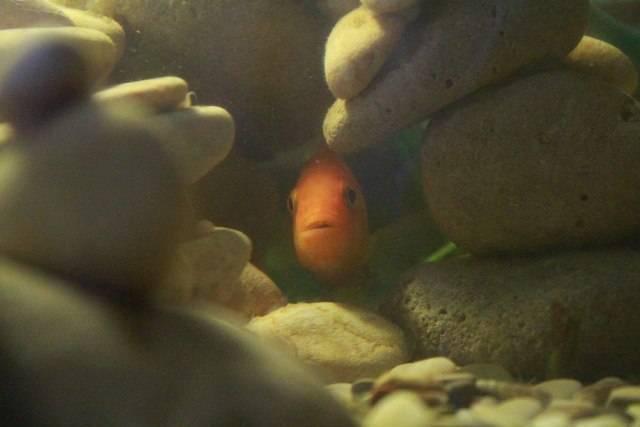 Спят ли рыбы по ночам, в аквариуме и на речке - рыбакmak