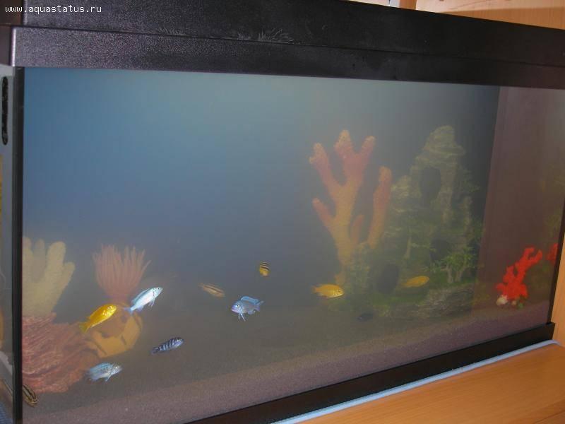 Почему мутная вода в аквариуме, что делать?