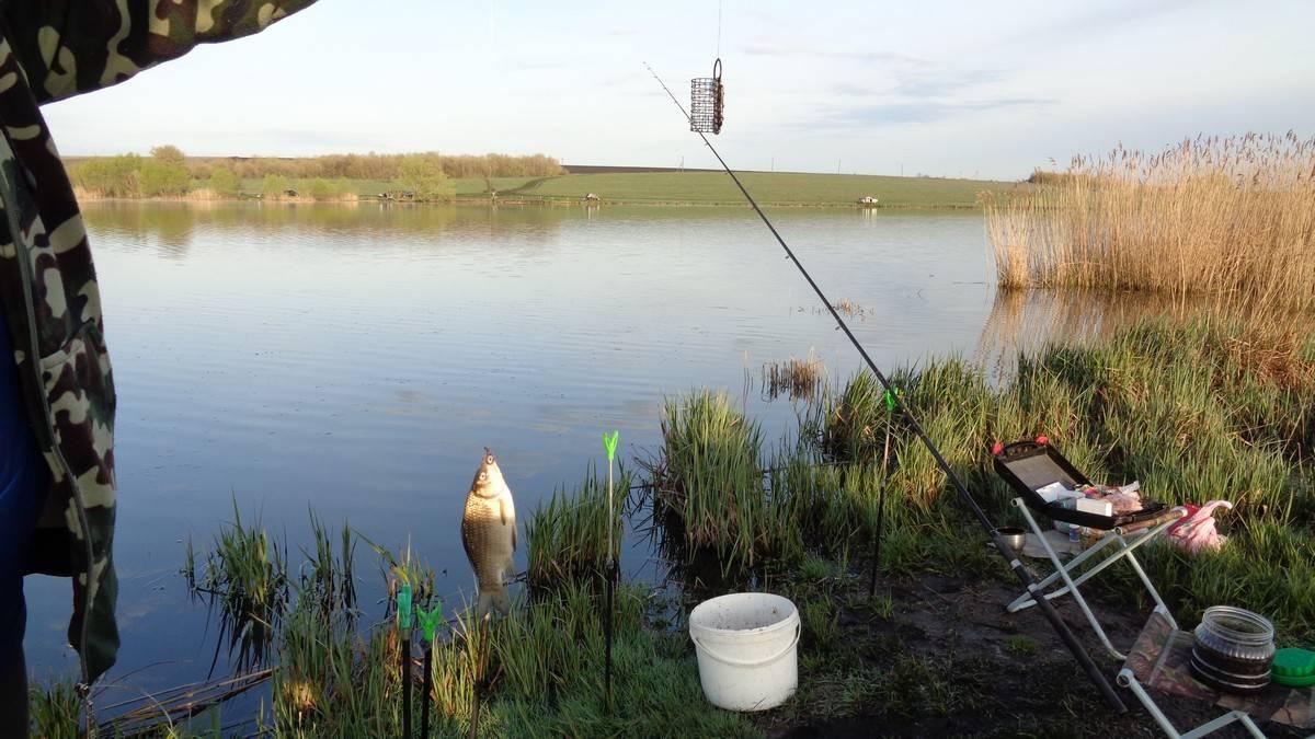 ✅ прогноз клева рыбы в костанайской области - danafish.ru