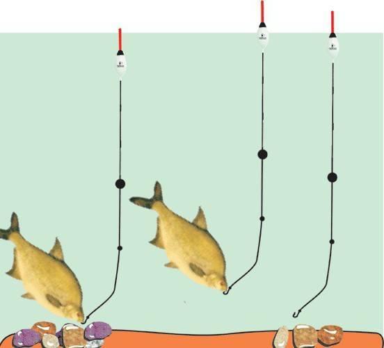 Ёрш. ловля, особенности, образ жизни – рыбалке.нет