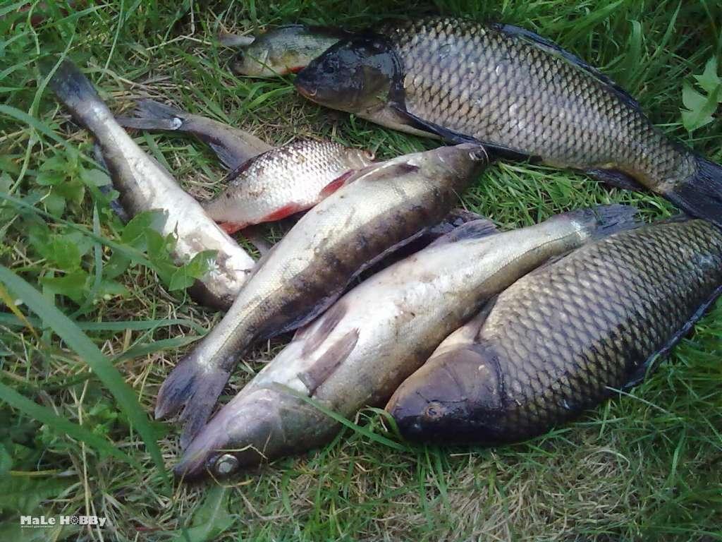 Муромское озеро шатура рыбалка - рыбалка