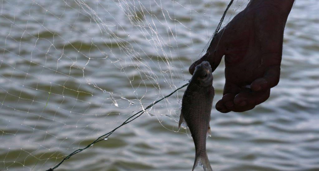 Подробная характеристика и описание знака зодиака Рыбы