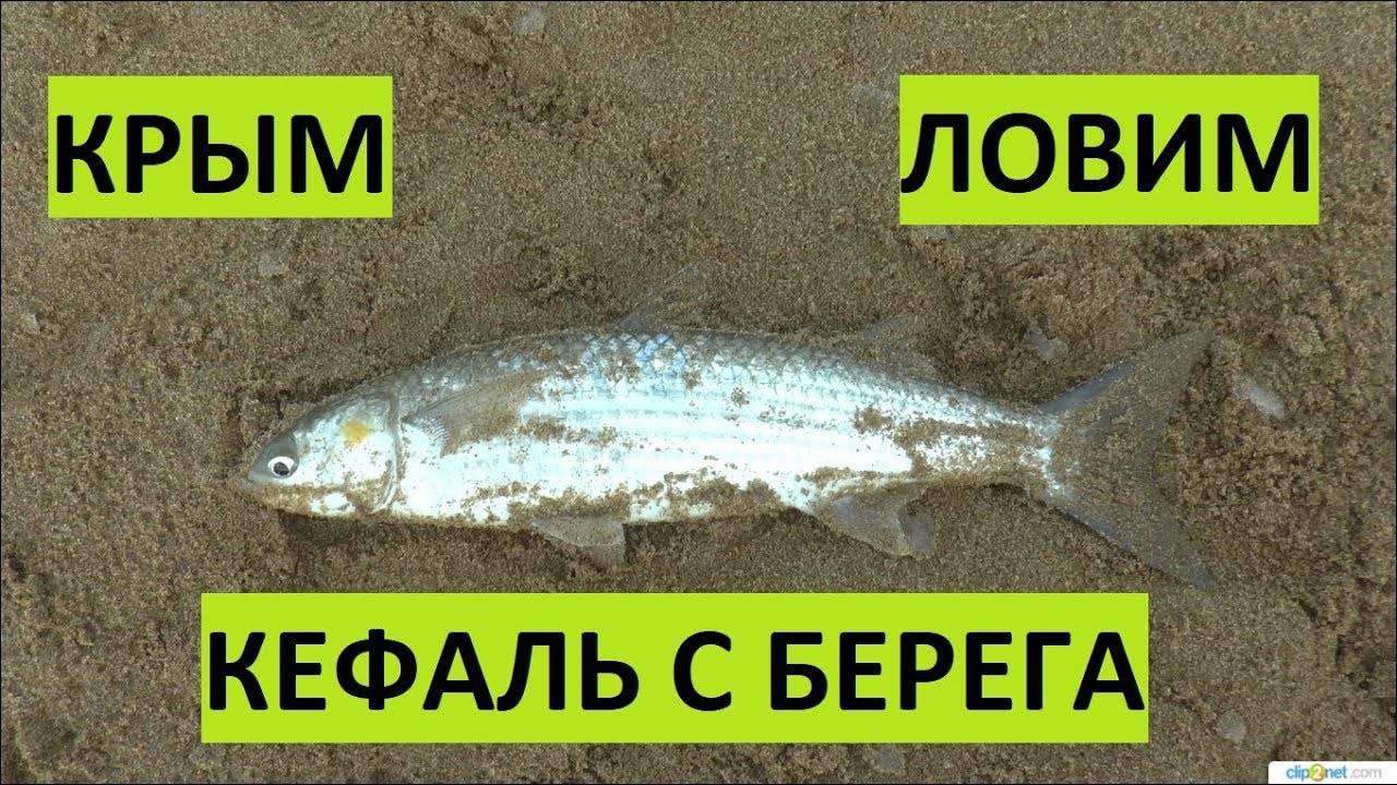 Ловля кефали - методы, особенности и практические советы для начинающих рыбаков (110 фото)