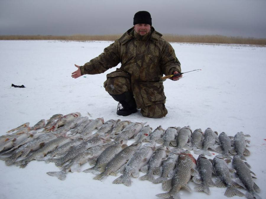 Рыболовные базы на нижней волге и в её дельте: почем отдых с рыбалкой сегодня?