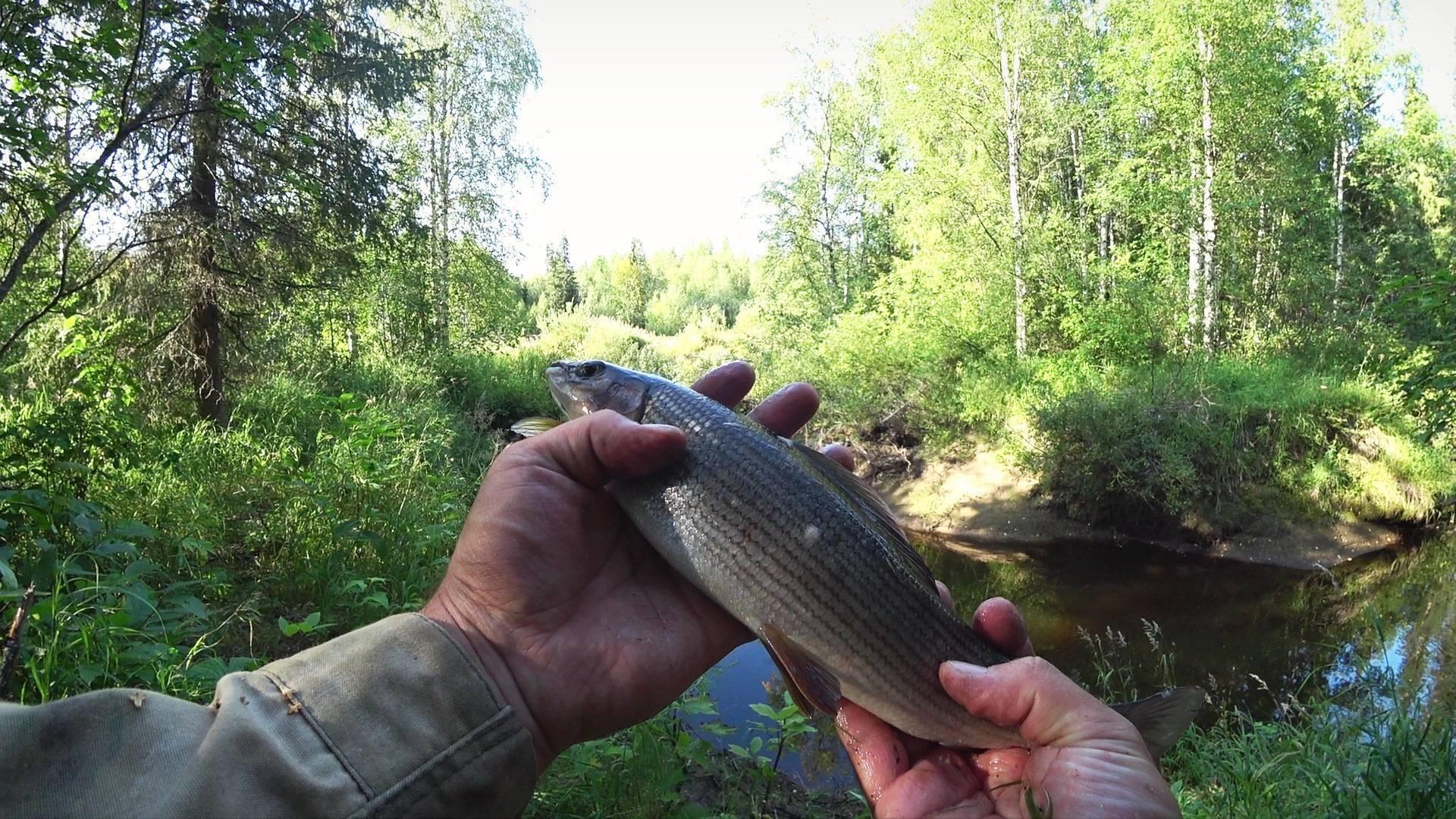 Основы выживания в тайге – рыбалке.нет