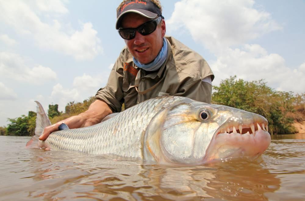 Как выглядит тигровая рыба голиаф: характеристика, опасна ли она для человека, можно ли её держать дома