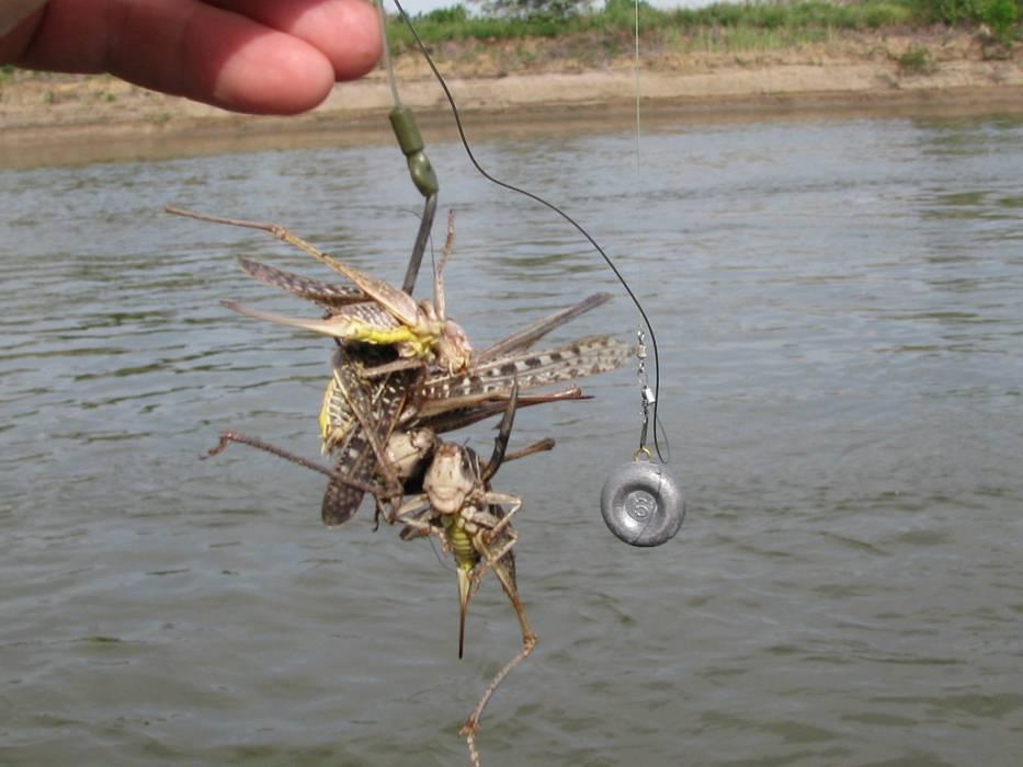 Как ловить осетра на платнике в подмосковье: на что клюет летом, прикормки для ловли