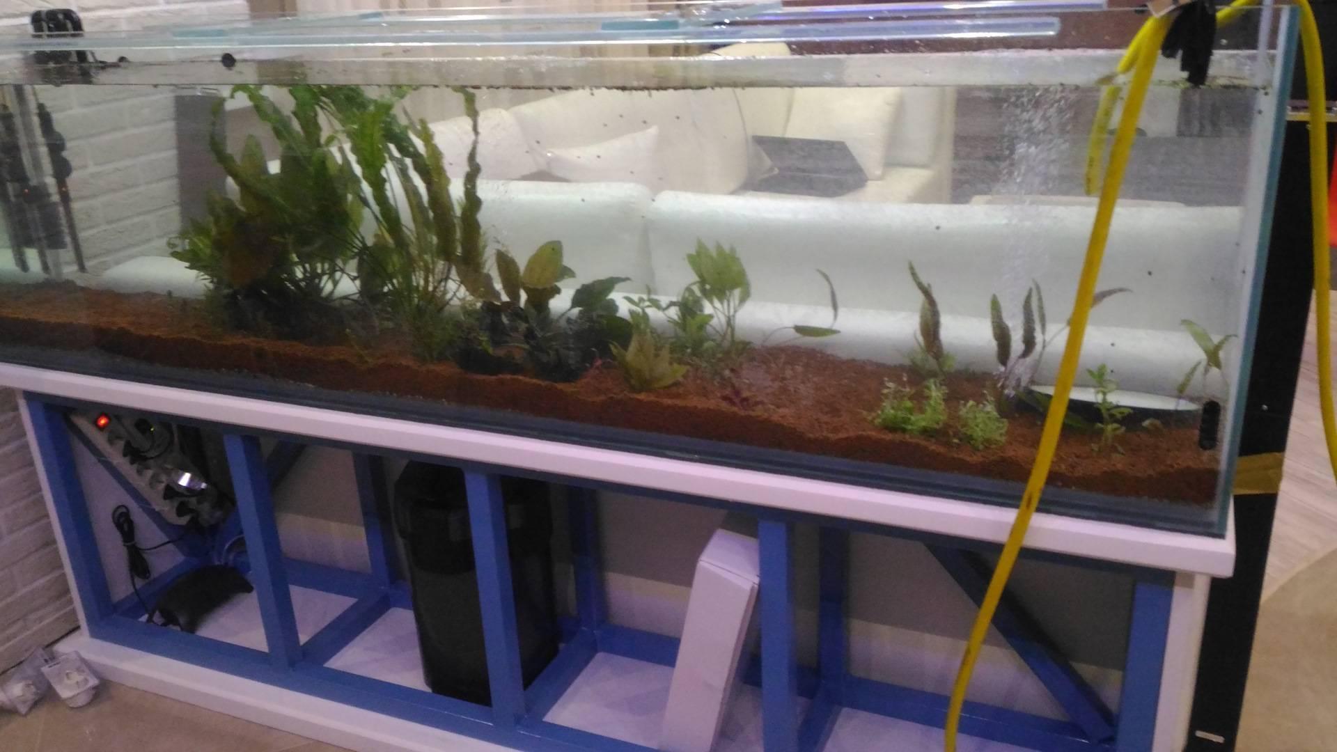 Пошаговый процесс запуска аквариума для новичков, что нужно соблюдать?