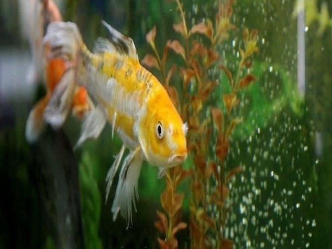 Приметы про аквариум в доме - хорошо или плохо иметь аквариум? если отдать?