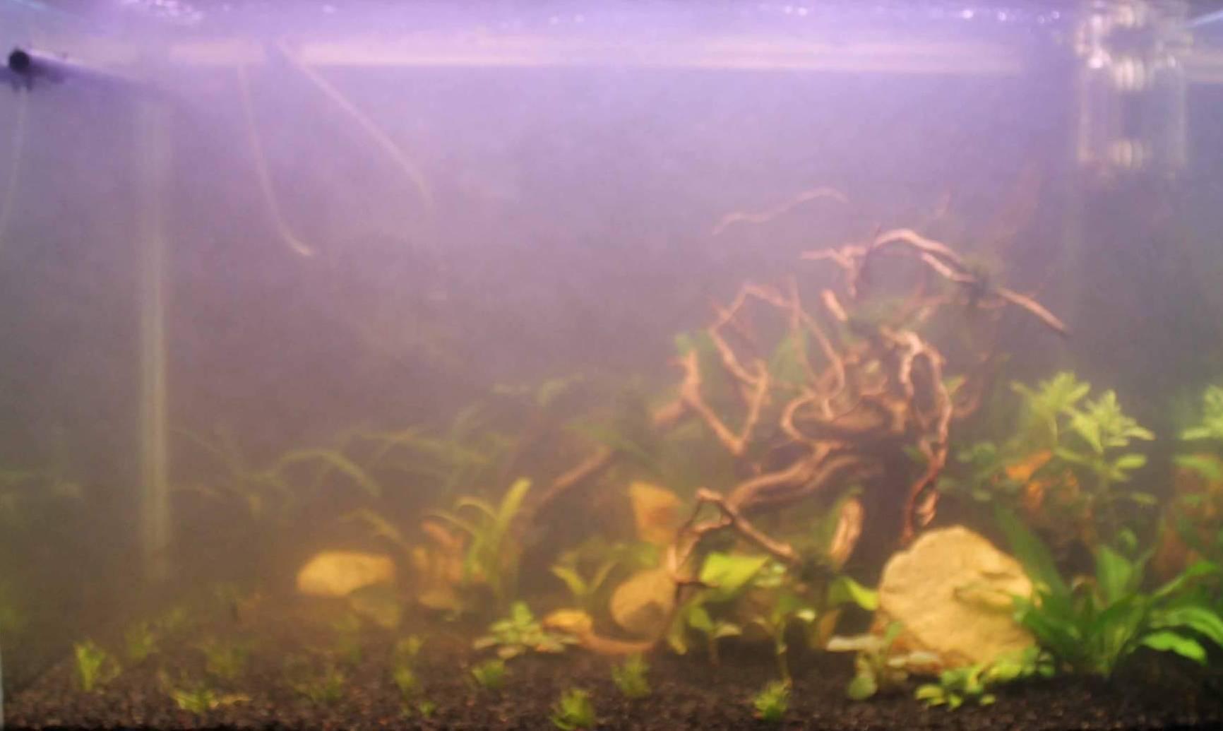 Почему мутнеет вода в аквариуме: причины, как избавиться от помутнения
