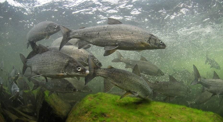 Аквариумная рыбка сомик, чем питается, как содержать и как размножается - ribulki.ru