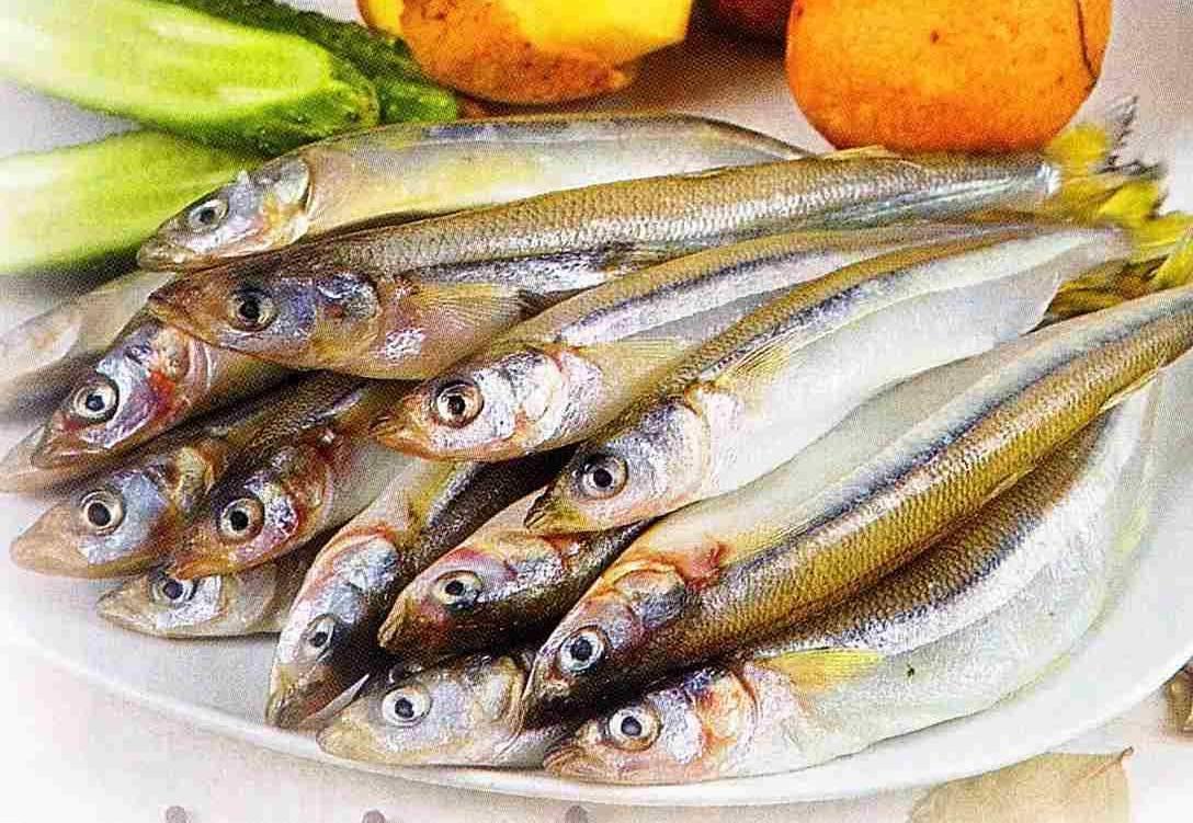 Корюшка рыба. описание, особенности, среда обитания и виды корюшки | животный мир