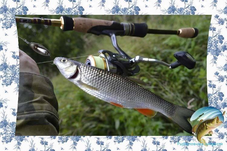 От а до я о рыбалке спиннингом на реке: раскрываем все нюансы