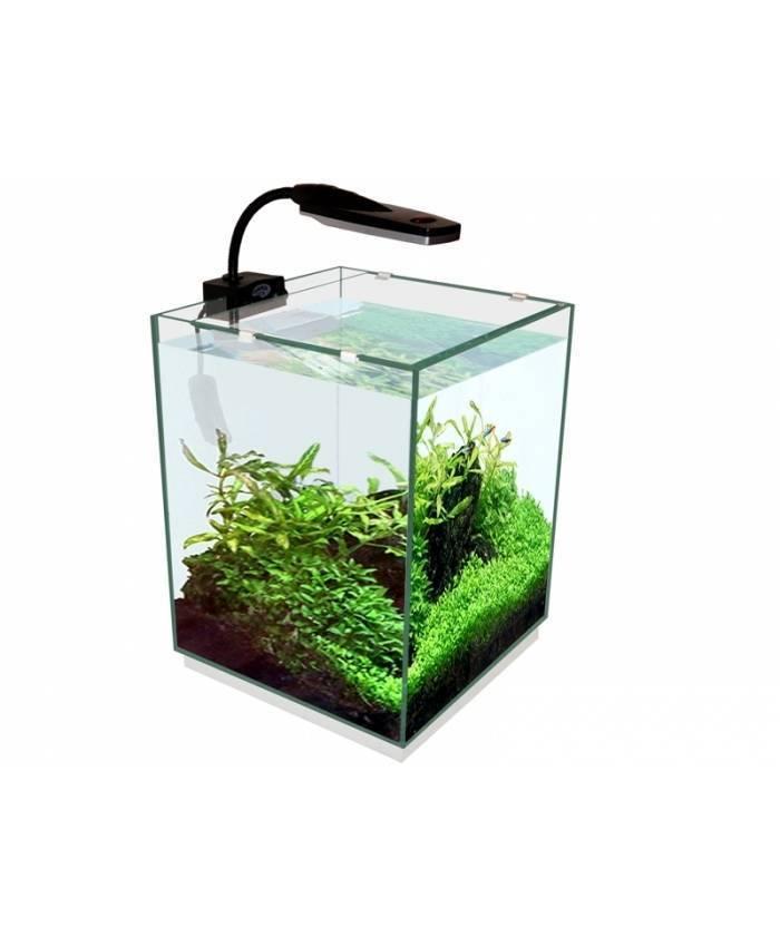 Настенный аквариум виды описание фото обслуживание особенности