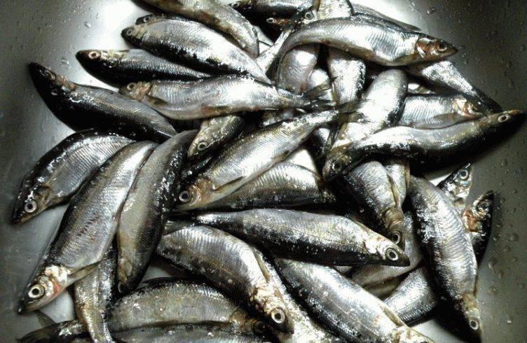 Рыба ряпушка содержание полезных веществ, польза и вред, свойства