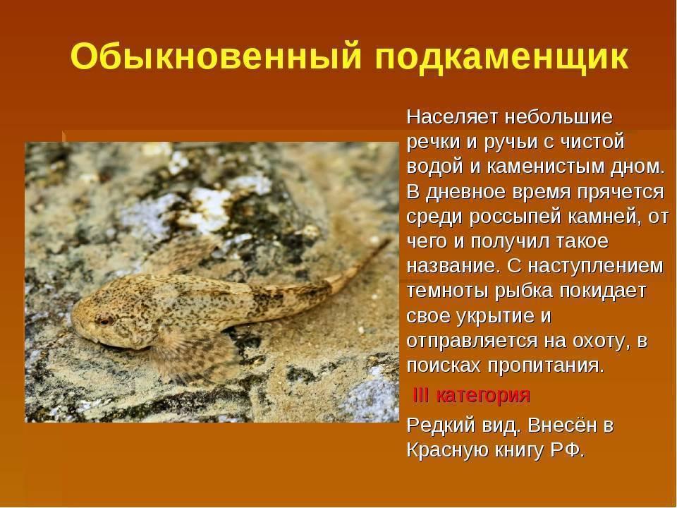 Редкие животные из красной книги россии и всего мира