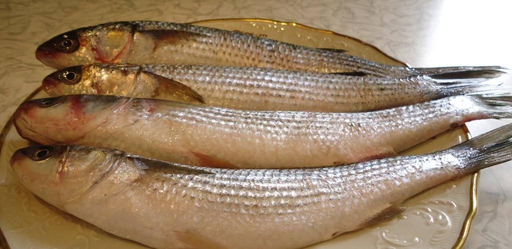 Рыба лобань полезные свойства