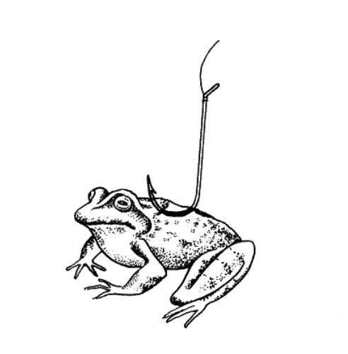 Сом - на что ловить и где лучше - на живец, лягушку, снасти и приманки
