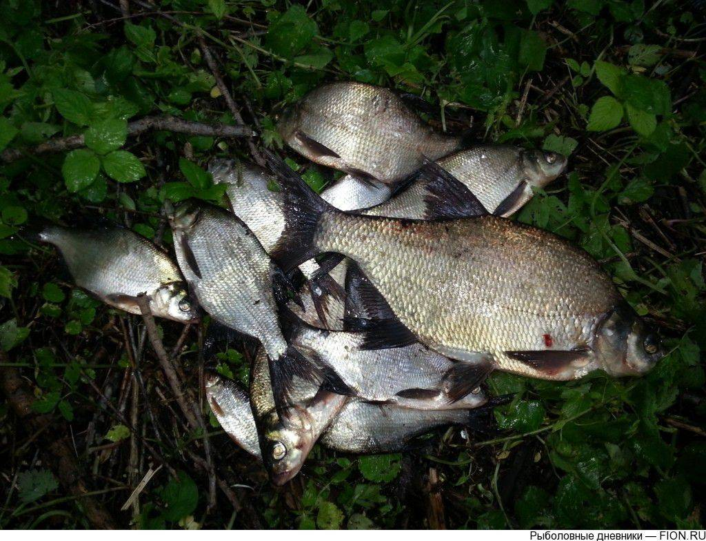 Долгуша шатурский район рыбалка