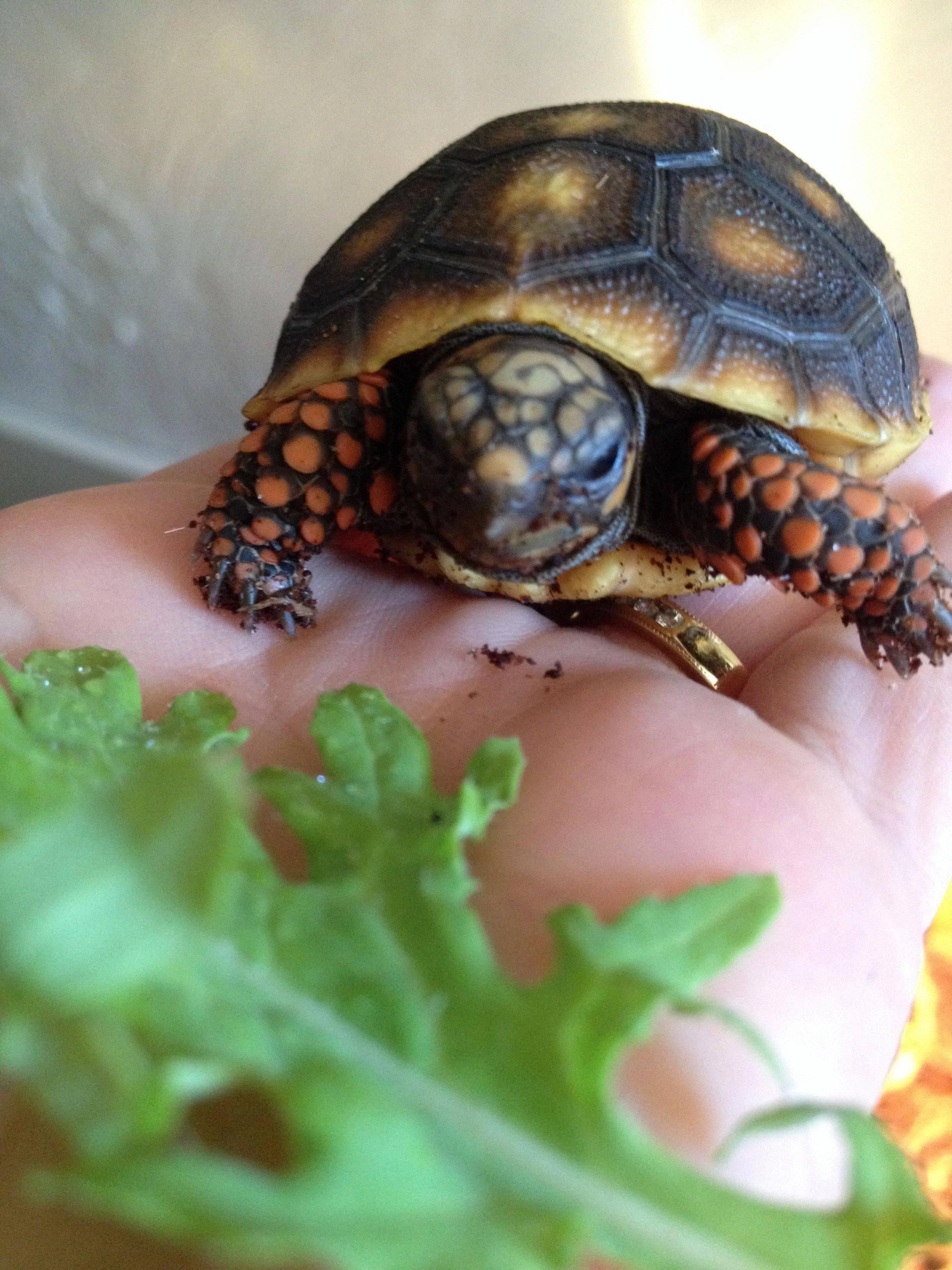 ᐉ какую черепаху лучше завести дома для ребенка, как правильно выбрать - zoopalitra-spb.ru