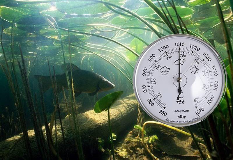 Давление для рыбалки: при каком атмосферном давлении клюет рыба? как оно влияет на клев? ловля при низком и высоком давлении летом