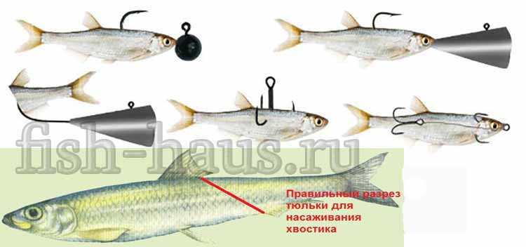Ловля судака зимой на блесну, жерлицы, балансир, тюльку и раттлины. выбираем снасти для рыбалки
