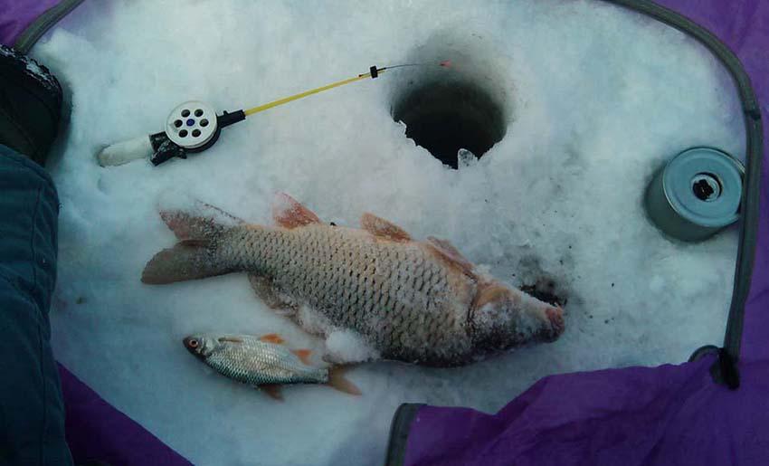 Тонкости ловли карпа зимой на мормышку — секреты и техника рыбалки