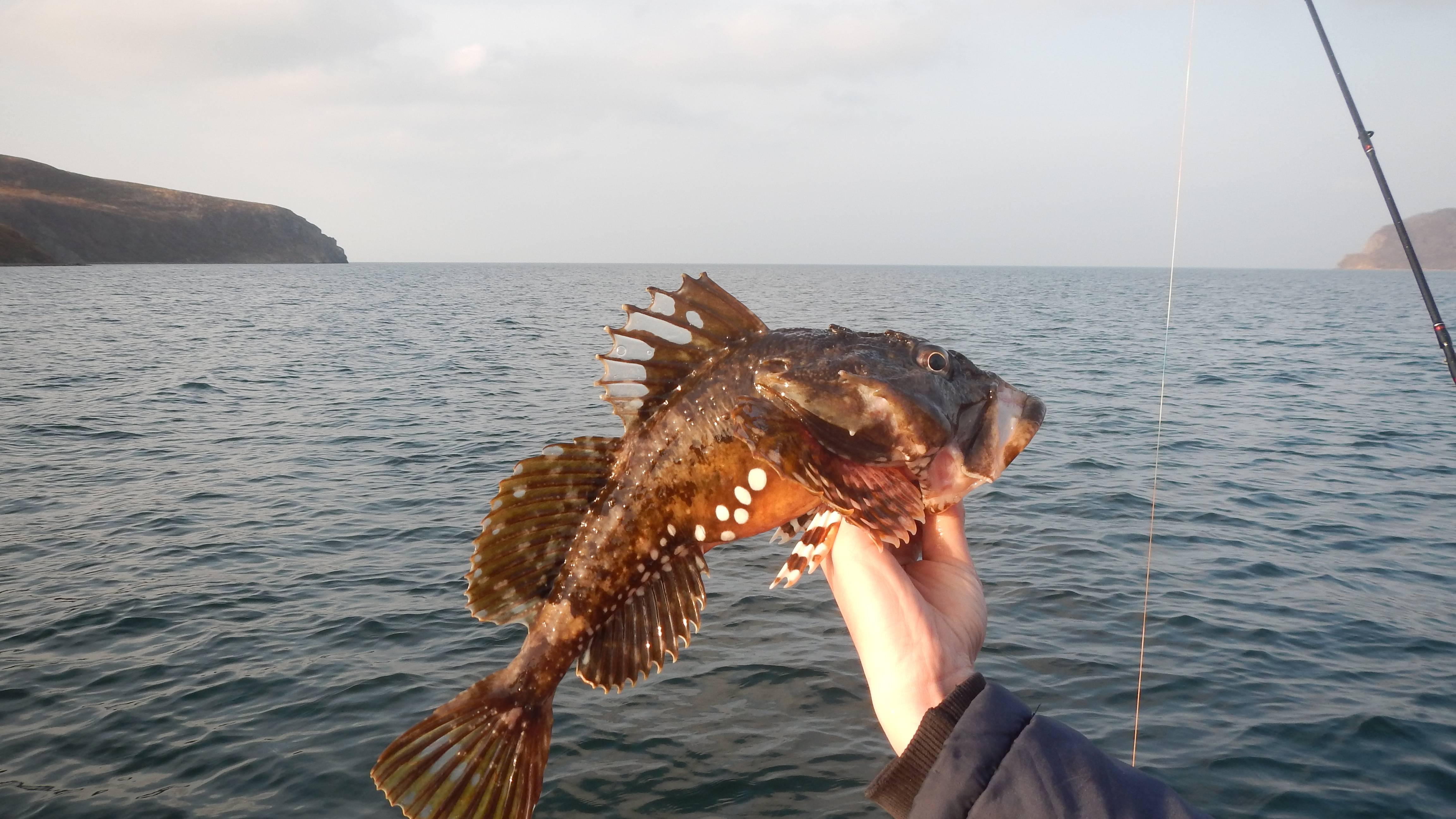 На рыбалку на белое море: что ловить, рыбные места
