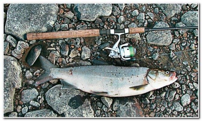 Байкальская рыбалка по ледоставу. Байкальский омуль.