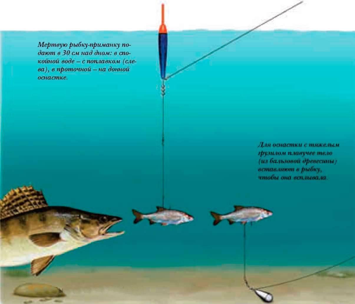 Что такое бровка и другие загадки речных глубин | все о рыбалке - где и как ловить рыбу, снасти и приманки