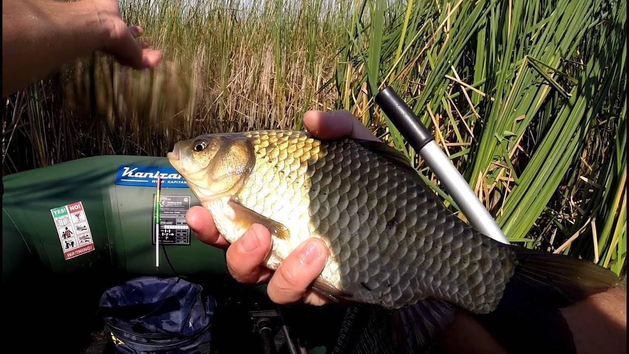 Советы рыбакам: как поймать карася :: syl.ru