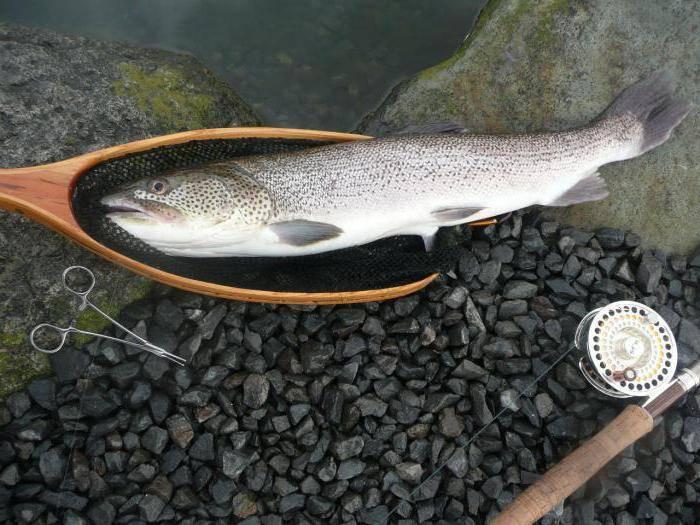 Рыбалка на реке сейм в курской области: рыбные места на карте, какая рыба водится