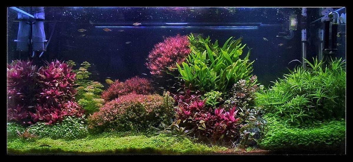 Аквариум с растениями или травник. Выбор, посадка и содержание живых аквариумных растений.