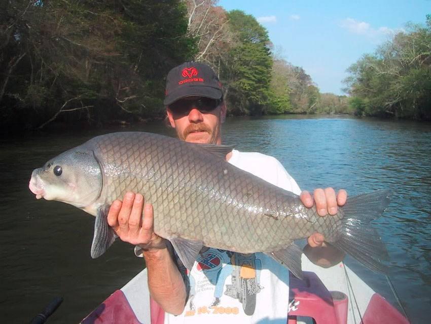 Буффало (рыба). речная рыба буффало: фото и описание. где водится рыба буффало?