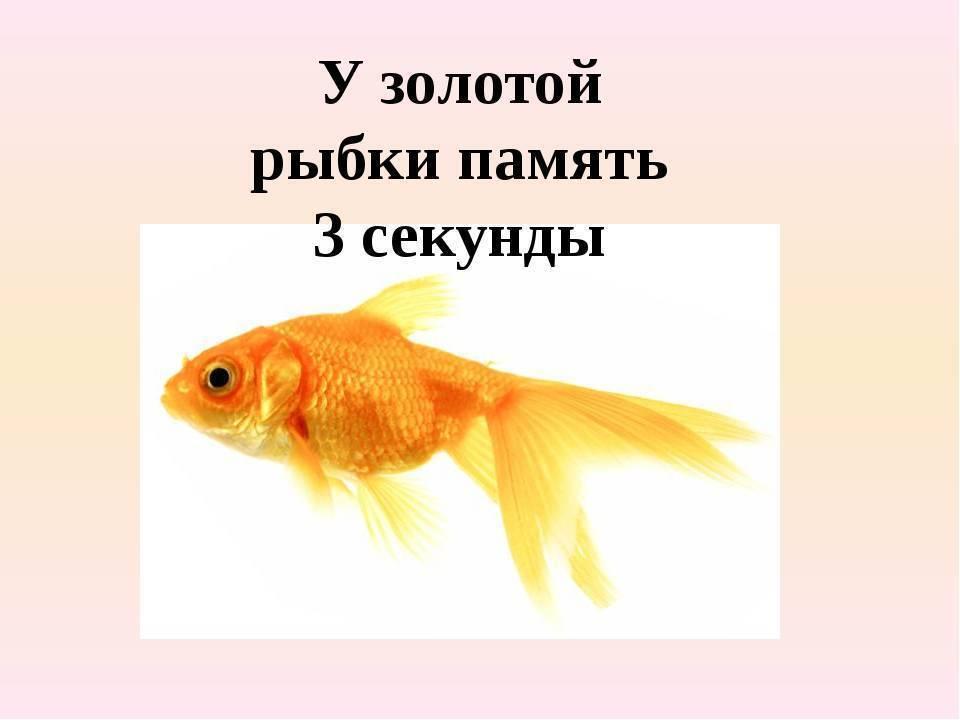 Сколько секунд длится память у рыб: мифы о домашних рыбках