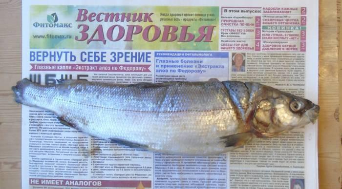 Рыба муксун: польза и свойства. как приготовить муксун и рецепты - вмоменте