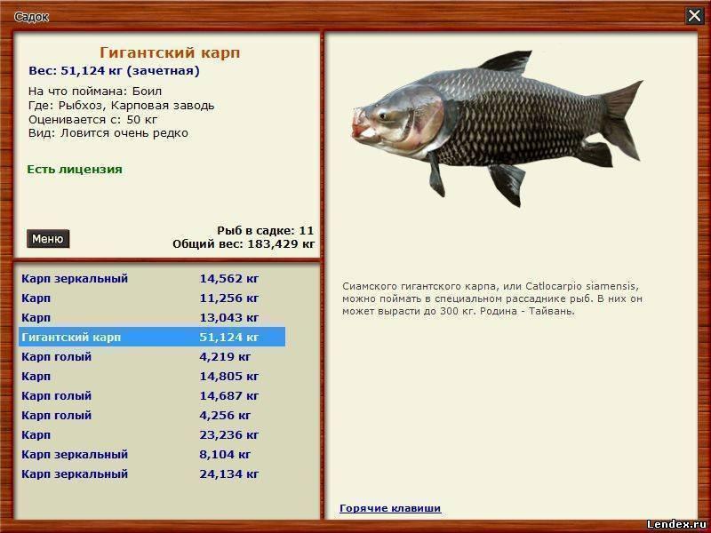 Как ловить большую рыбу - 4 составляющих успеха!