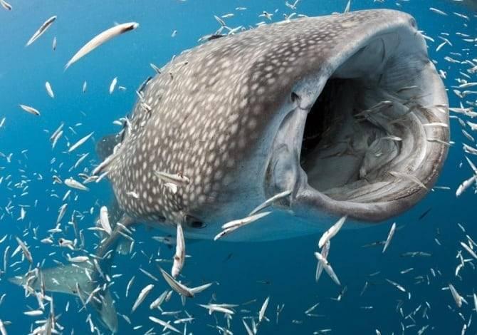 Топ 10 самых больших рыб в мире