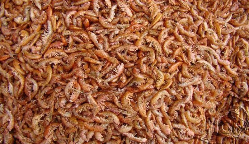 Гаммарус корм для рыб