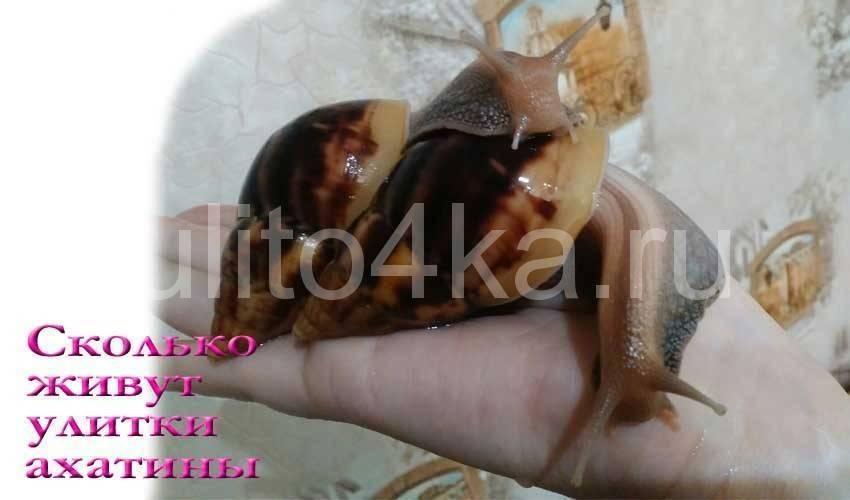 Как называются маленькие улитки. аквариумные улитки все виды, фото и названия