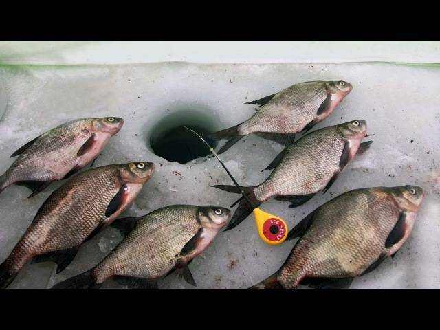 Зимняя рыбалка в январе