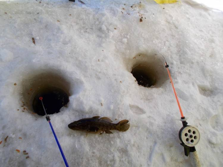 Ловля ротана в зимний период