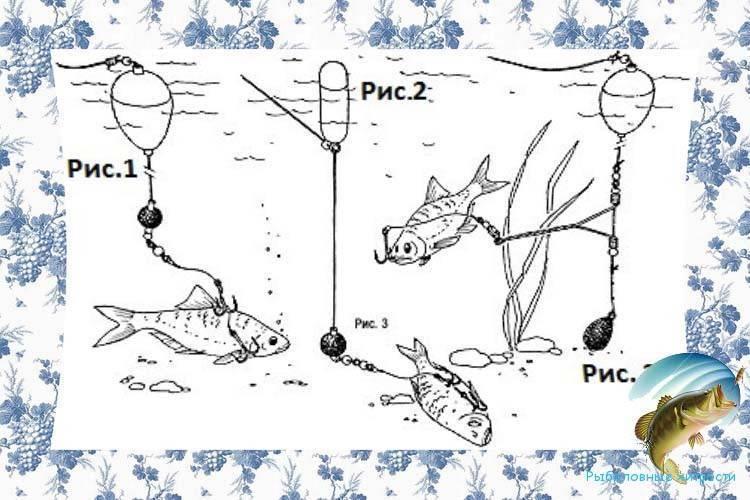 Ловля жереха: как ловить на спиннинг, на что клюет, приманки и снасти