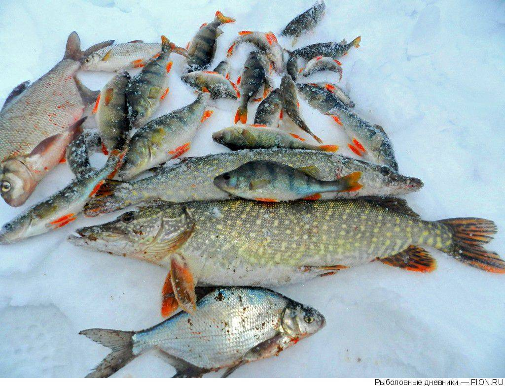 Рыбалка в курганской области. карта рыболовных мест...
