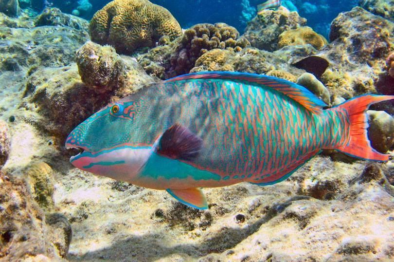 Рыбы красного моря | интересный сайт