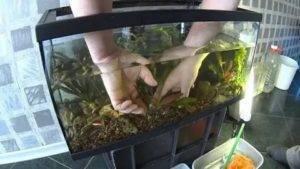 Запуск аквариума (мой первый аквариум)