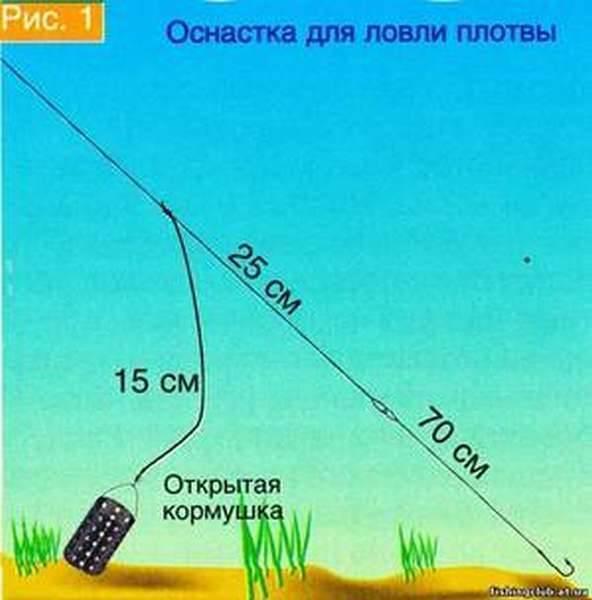 Рекомендации по ловле плотвы на течении