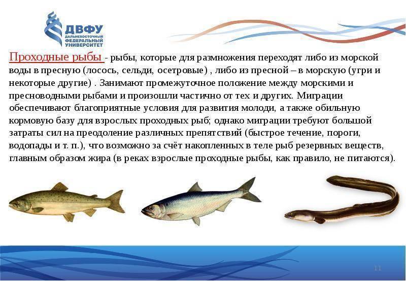 Где водится рыба скумбрия, польза и как приготовить