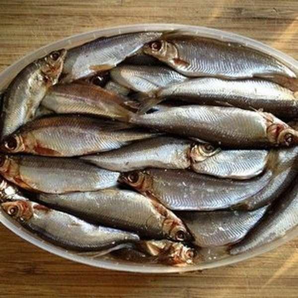 Тугун | фото, виды рыб, ареал обитания, образ жизни и способ ловли