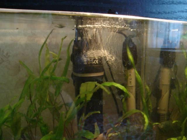 Как чистить дно в аквариуме с грунтом: описание,фото,видео. | аквариумные рыбки